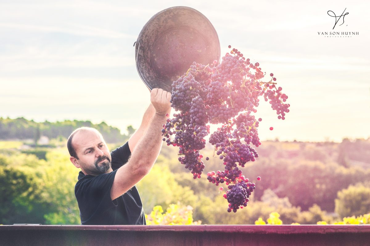 Photographies De Vendanges Côte Du Rhone Avignon